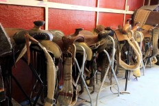 Equine Facilities tack shed